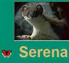 SERENA-Image