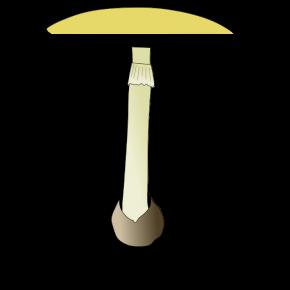 amanite-phaloide