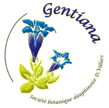logo_gentiana