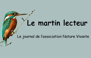 Martin Lecteur