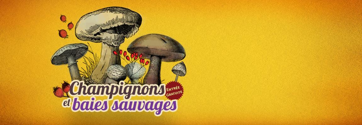 Exposition champignons et baies sauvages