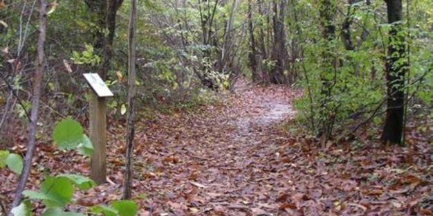 Bois de Chapulay