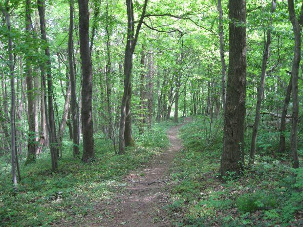 Forêt de Malissol