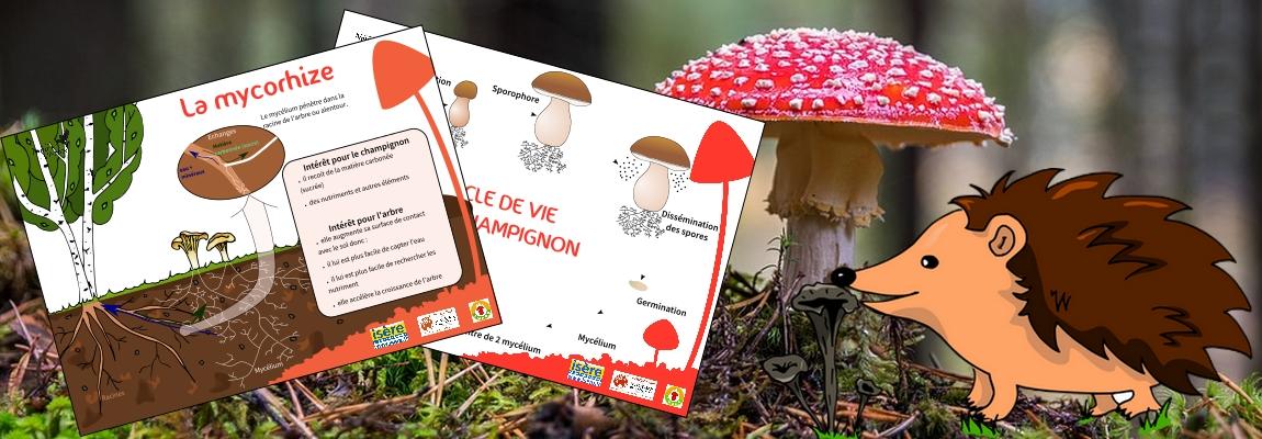 Boîte à outils pédagogiques sur les champignons disponible !